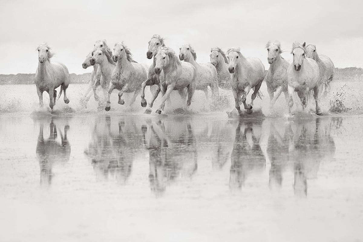 Лошади Камаргу